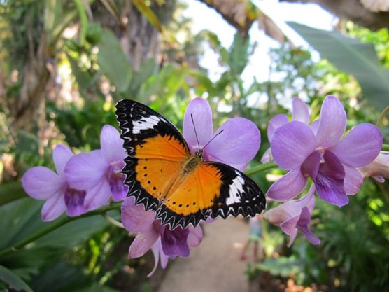 Banteay Srey Butterfly Center