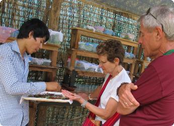 Papillons à découvrir à Siem Reap